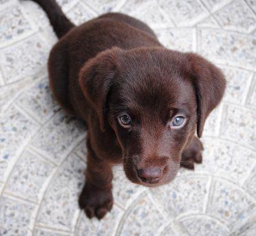 Hund Hundewelpen Name Finden