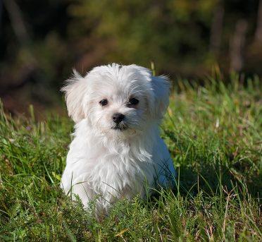 Hundenamen für kleine Hunde
