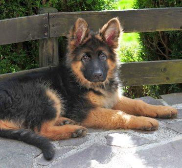 Deutsche Hundenamen
